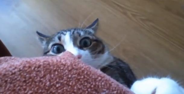 cats9_610x311