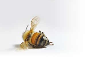 (Photo Source: www.honeybeekind.com)