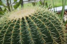Drew University Cactus