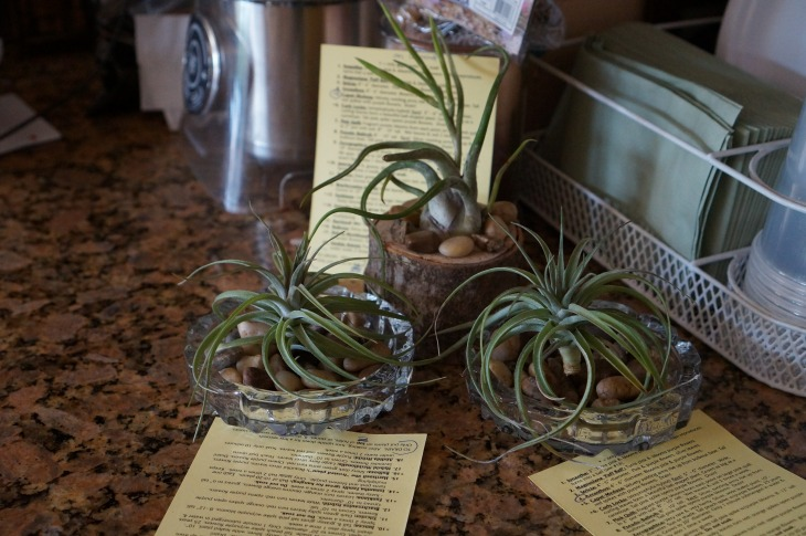 Diverse airplants