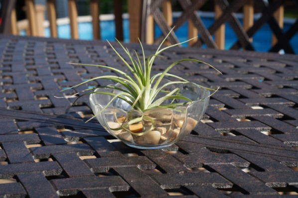 airplant conversation piece