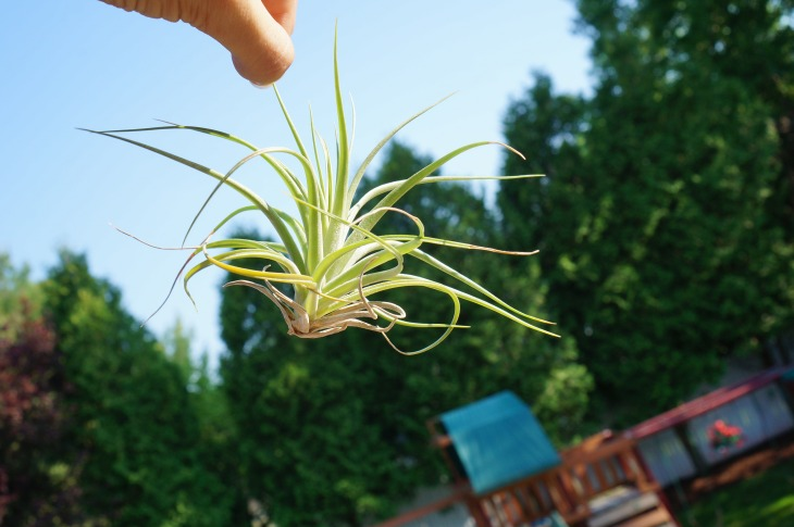 hanging an airplant